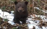 На украинской границе спасли красивого медвежонка (фото)