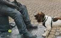 Собака не могла понять, почему статуя человека не хочет с ней играть (видео)