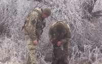Военный врач пять часов оперировала раненную фронтовую собаку