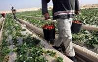 В Польше снова начало расти число украинских трудовых мигрантов