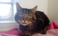 Кот проехал за решеткой радиатора машины 120 километров и выжил