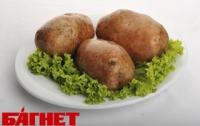 На Львовщине выращен рекордный урожай картофеля