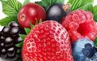 Туристы пытались вынести 30 кг ягод из Чернобыльской зоны