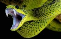На Прикарпатье ребенок попал в реанимацию после укуса змеи