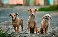 Собаки оказались способными считать не хуже двухлетнего ребенка