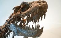 Вчені визначили силу укусу тиранозавра