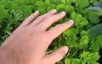 Удивительное растение моментально реагирует на прикосновение (ВИДЕО)
