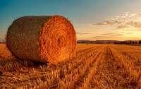 Рынок земли: В Украине зарегистрировано более 6 тыс. земельных сделок