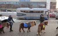 Необычный автобус удивил киевлян (видео)