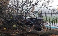 В Киеве пьяный водитель вылетел с дороги в дерево