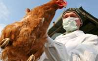 Вспышку птичьего гриппа зафиксировали в Виннице