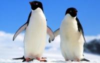 В Антарктике от голода умерли 150 тысяч пингвинов