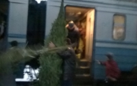 На Львовщине недовольные пассажиры устроили бунт из-за массовой перевозки елок