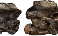 В Греции нашли останки неизвестных науке змей