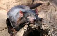 В Австралии впервые за 3 тысячи лет родились редчайшие животные