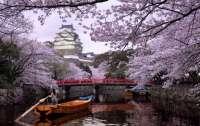 Цветение сакуры в Японии началось рекордно рано в этом году