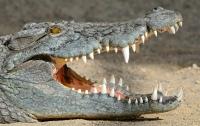 Крокодил убил журналиста Financial Times