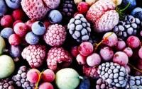 Комплекс по шоковой заморозке ягод построят в Украине