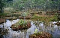 Женщина несколько дней пролежала в болоте перед тем, как ее нашли