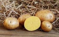 Чем опасен картофель: овощ входит в список вредных для здоровья продуктов