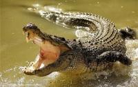 Полицейским пришлось стрелять в утащившего рыбака крокодила