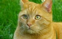 Киевские коты стали частью экосистемы города