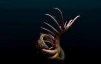 Ученые нашли останки невероятного создания возрастом 500 миллионов лет (ВИДЕО)