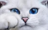 Найден кот с самыми красивыми глазами