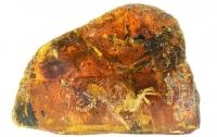 В Китае нашли застывшего в янтаре птенца возрастом в 99 миллионов лет