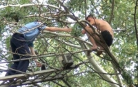 Пьяный мужчина просидел два часа на дереве, требуя вертолет и сосиску в тесте