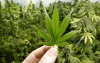 Нардеп работают над тем, чтобы легализовать марихуану
