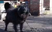 Після порад продати собаку: громада Аджамки вимагає зустрічі зі