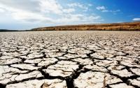 В Украине засуха охватила около 40% озимых