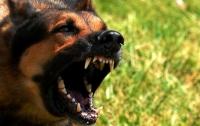 На Донбассе собака изуродовала девочку