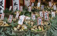 Японские ученые рассказали о роли грибов в профилактике рака