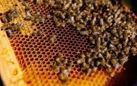 Пчеловод рассказал об особенностях медового бизнеса