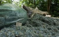 Под Днепром в посадке нашли сотни миллионов измельченных гривен (видео)