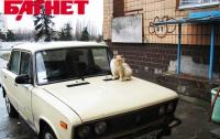 Бондаренко хочет брать плату за парковку во дворах
