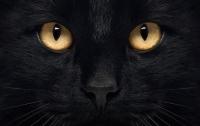 Британский кот получил посмертную премию за спасение хозяйки