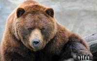 11-летний ребенок спас взрослых от медведя
