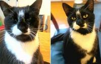 Кот два года воровал нижнее белье у соседей и приносил его домой