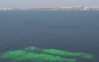 Еще более 30 лет назад было спрогнозировано ухудшение экологии Одесского залива