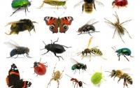 Что случится с насекомыми в скором времени