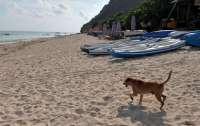 Застрявшие на Бали украинцы сравнили себя с брошенными собаками