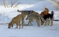 В Киеве бешенные собаки искусали двух взрослых и школьницу