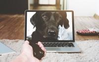 Хакеры переключились на гаджеты для домашних животных