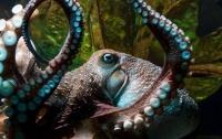 Осьминог сбежал из океанариума в океан