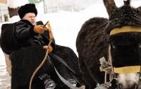 Жириновский за осла ответит