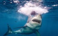 Кровавый бой двух акул запечатлели на видео