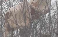 Люди выбросили диван, он застрял на дереве над головами прохожих (фото)